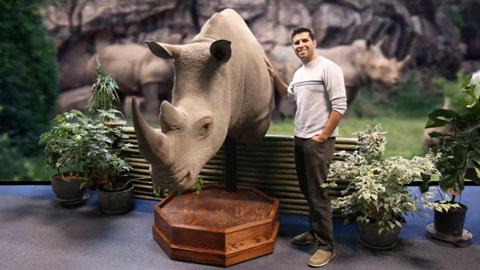 Brush-On25涂刷型硅胶在博物馆质量级犀牛制作中的应用